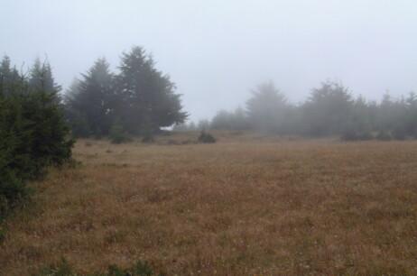 Dears In The Meadow